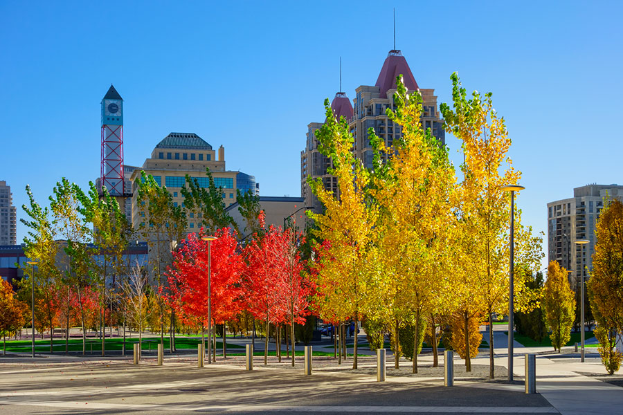 Urban trees in the fall
