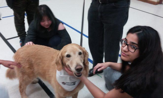 November 2017 – Dog Therapy